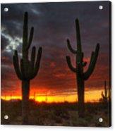 Sonoran Desert Sunrise 1 Acrylic Print