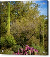 Sonoran Holiday Acrylic Print