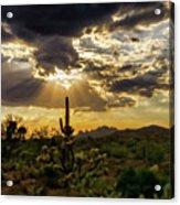 Sonoran Splendor  Acrylic Print