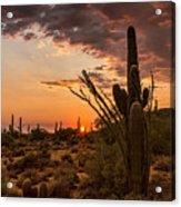 Sonoran Summer  Acrylic Print