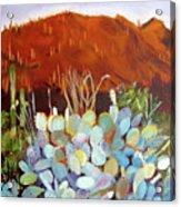 Sonoran Sunset Acrylic Print