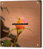 Soon A Beauty #b3 Greetingcard To A New Born Acrylic Print