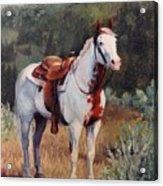 Sophie Flinders Paint Mare Horse Portrait Painting Acrylic Print