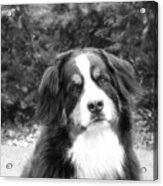 Sophie - In Infrared Black And White Acrylic Print