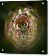Sorry Said The Frog 1 Acrylic Print