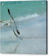 Sound Of Seagulls Acrylic Print