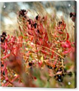 South Lake Beauties Acrylic Print