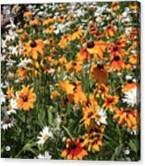 South Lake Tahoe Flowers Acrylic Print