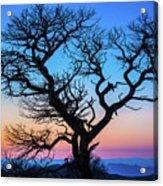 South Rim Tree Acrylic Print