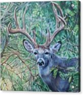South Texas Deer In Thick Brush Acrylic Print