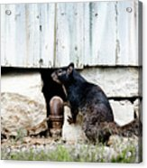 South Texas Squirrel Acrylic Print