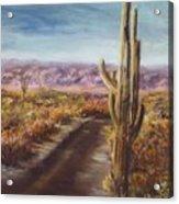 Southern Arizona Acrylic Print by Jack Skinner