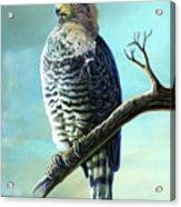 Southern Banded Snake Eagle Acrylic Print