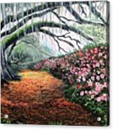 Southern Charm Oak And Azalea Acrylic Print
