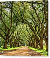 Southern Lane 5 Acrylic Print