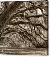 Southern Live Oak Trees Acrylic Print