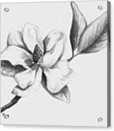 Southern Magnolia Acrylic Print