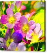 Southern Missouri Wildflowers 1 - Digital Paint 1 Acrylic Print
