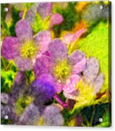 Southern Missouri Wildflowers 1 - Digital Paint 2 Acrylic Print