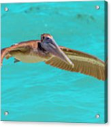 Southern Most Pelican Acrylic Print