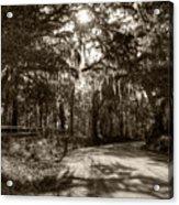 Southern Oak Shadows Acrylic Print