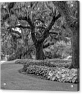 Southern Oaks In Black And White Acrylic Print