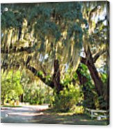 Southern Pathway Acrylic Print