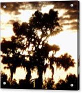 Southern Pine Acrylic Print