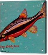 Southern Redbelly Dace Acrylic Print