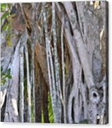 Southern Roots Acrylic Print