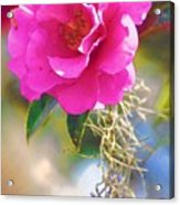 Southern Rose Acrylic Print