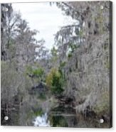 Southern Swamp Acrylic Print
