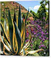 Southwest Arrangement Acrylic Print