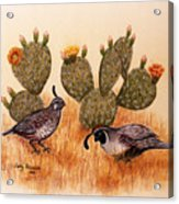 Southwest Art Gambels Quail Acrylic Print