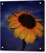 Southwest Sunflower Acrylic Print