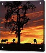 Southwestern Sunrise Color, Silhouetted Oak Tree And Three Horses Acrylic Print