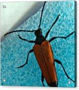 Space Age Beetle Acrylic Print