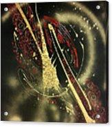Space2 Acrylic Print