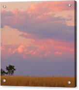Spacious Skies Amber Waves Of Grain Boulder County Acrylic Print