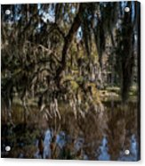 Spainsh Moss Hanging Over Pond On Middleton Place Acrylic Print