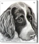 Spaniel Drawing Acrylic Print