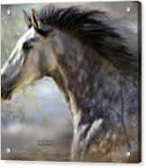 Spanish Beauty Acrylic Print