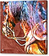 Spanish Horse Acrylic Print