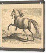 Spanish Horse Renaissance Engraving Acrylic Print