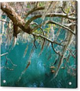 Spanish Moss And Emerald Green Water Acrylic Print