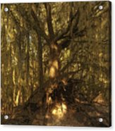 Spanish Moss Acrylic Print