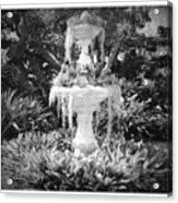 Spanish Moss Fountain With Bromeliads - Black And White Acrylic Print