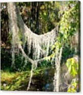 Spanish Moss Over The Swamp Acrylic Print
