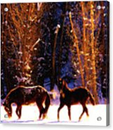 Spanish Mustangs Playing In The Powder Snow Acrylic Print