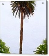 Spanish Palm Tree Acrylic Print